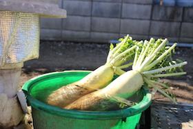 園内では野菜も栽培しています