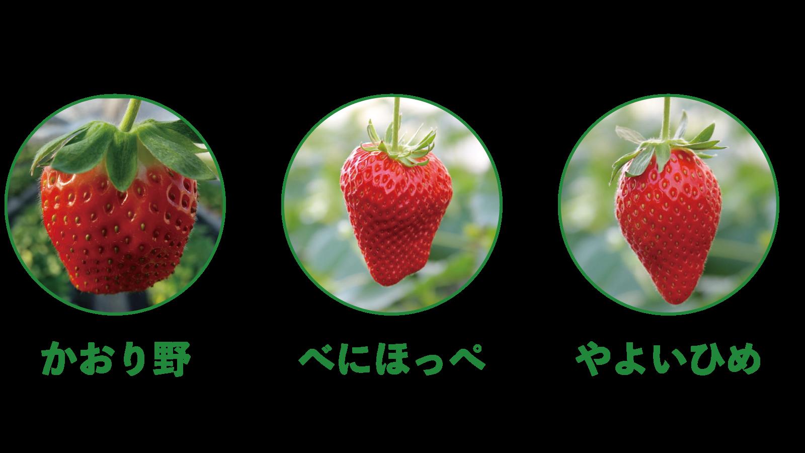 3品種のいちご